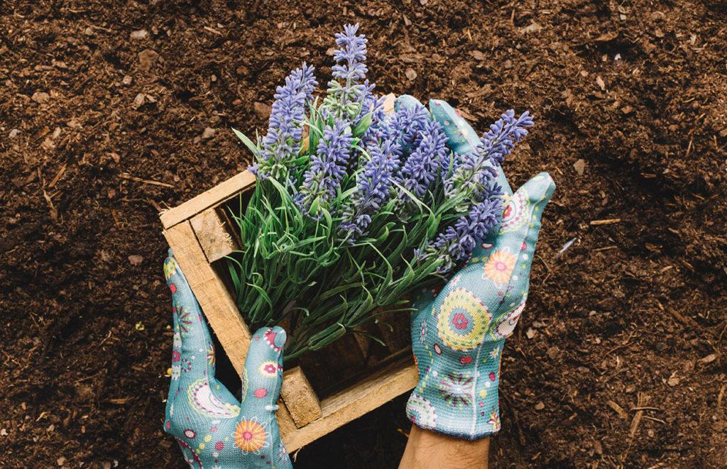 home_garden3_portfolio9